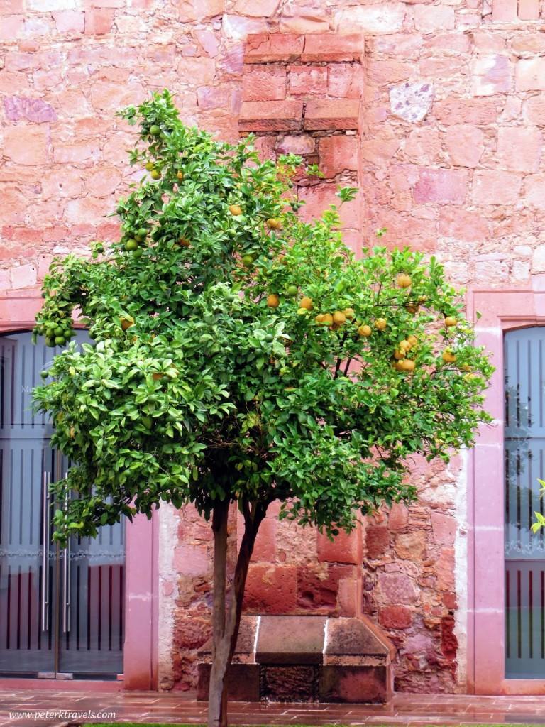 Orange Tree at Museo Galería Virreinal de Guadalupe Courtyard