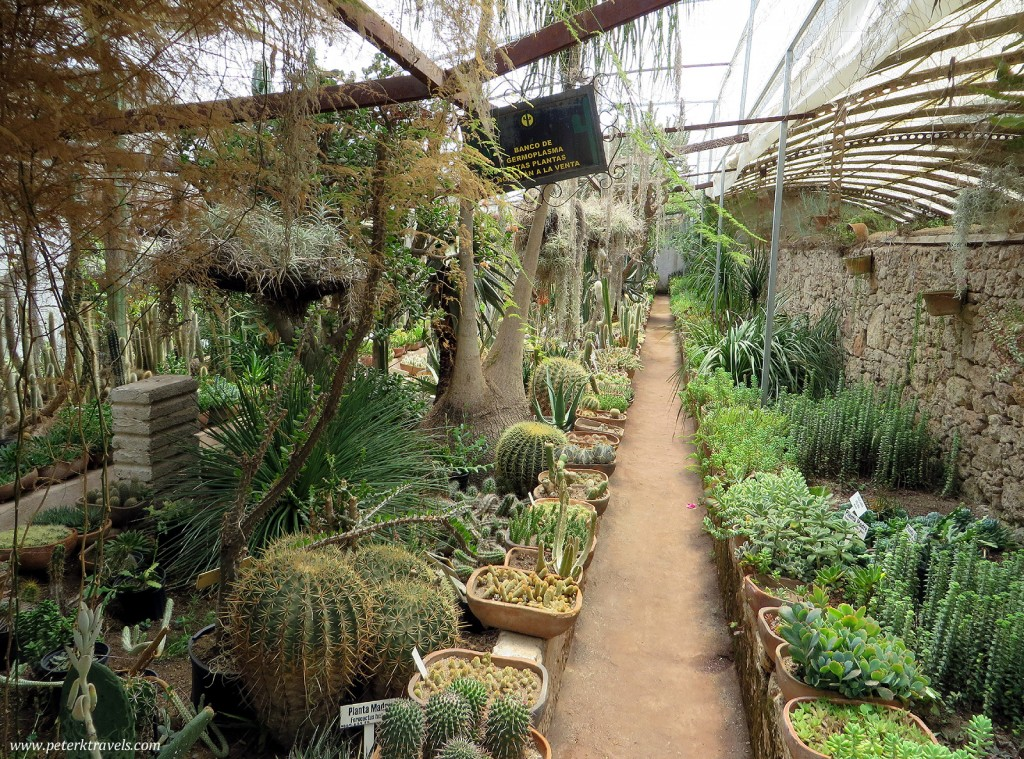Cacti at Quinta Schmoll, Cadereyta