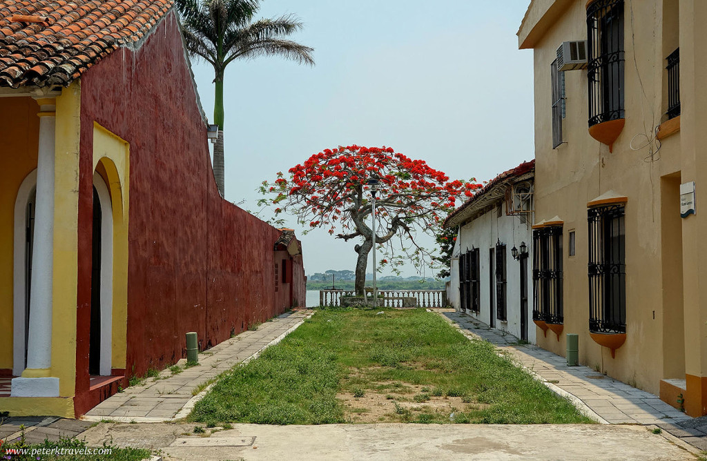 Beautiful tree between homes, Tlacotalpan