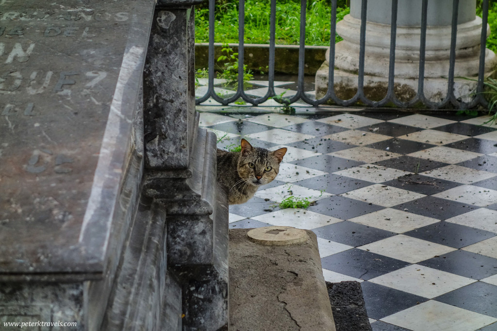 Curious Cat, Antiguo Panteón de Xalapa
