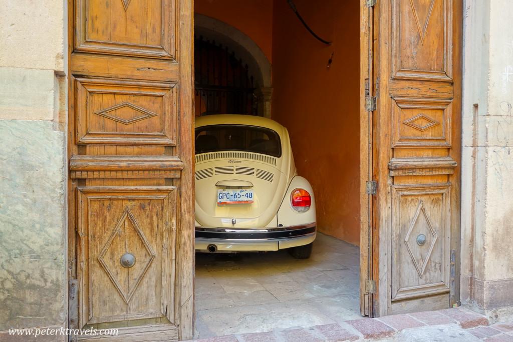 Hidden Beetle, Guanajuato