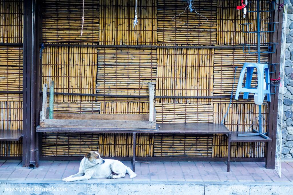 Dog, Panajachel Guatemala
