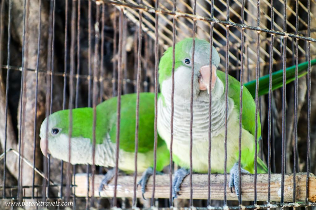 Birds, Puerto Vallarta
