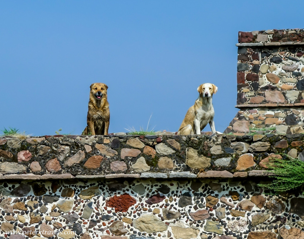 Dogs of Teotihuacan.