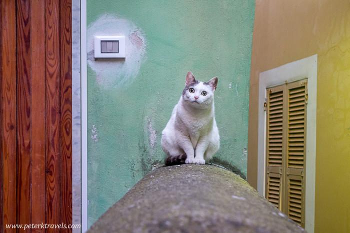 Cat in Vernazza, Italy.