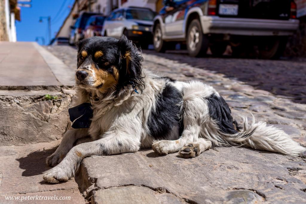 Dog, Sucre.