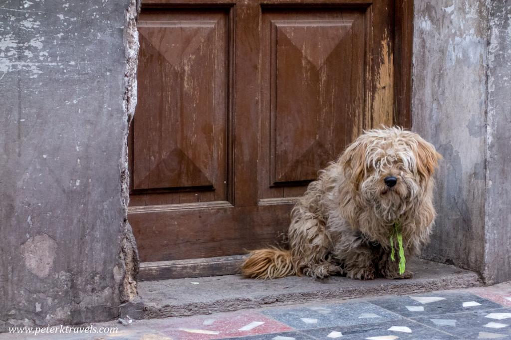 Dog, Potosi