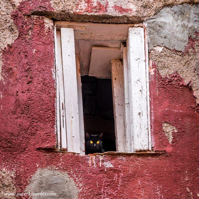 Cat, Guanajuato