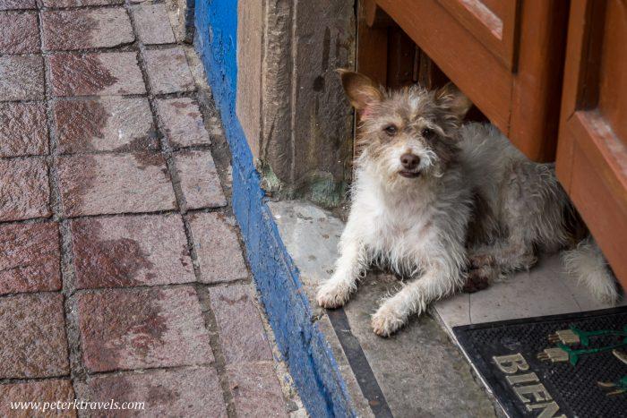 Dog, Guanajuato