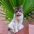 Collioure Cat