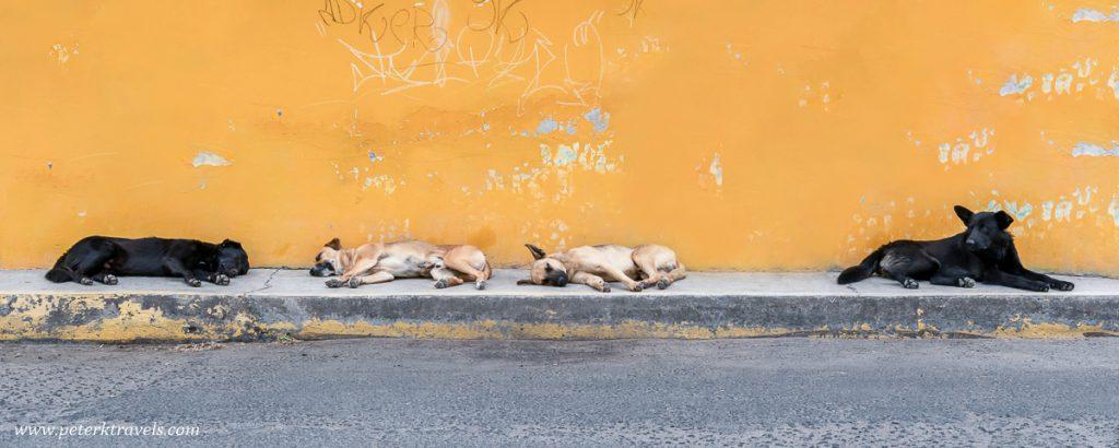 Dogs of Cholula