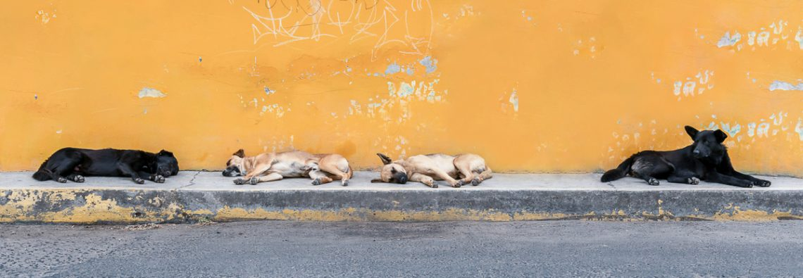 Dogs of Cholula