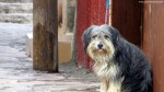Dog in Zacatecas