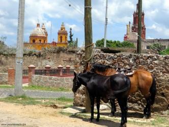 Horses in Cadereyta