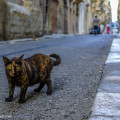 Cat, Valletta.